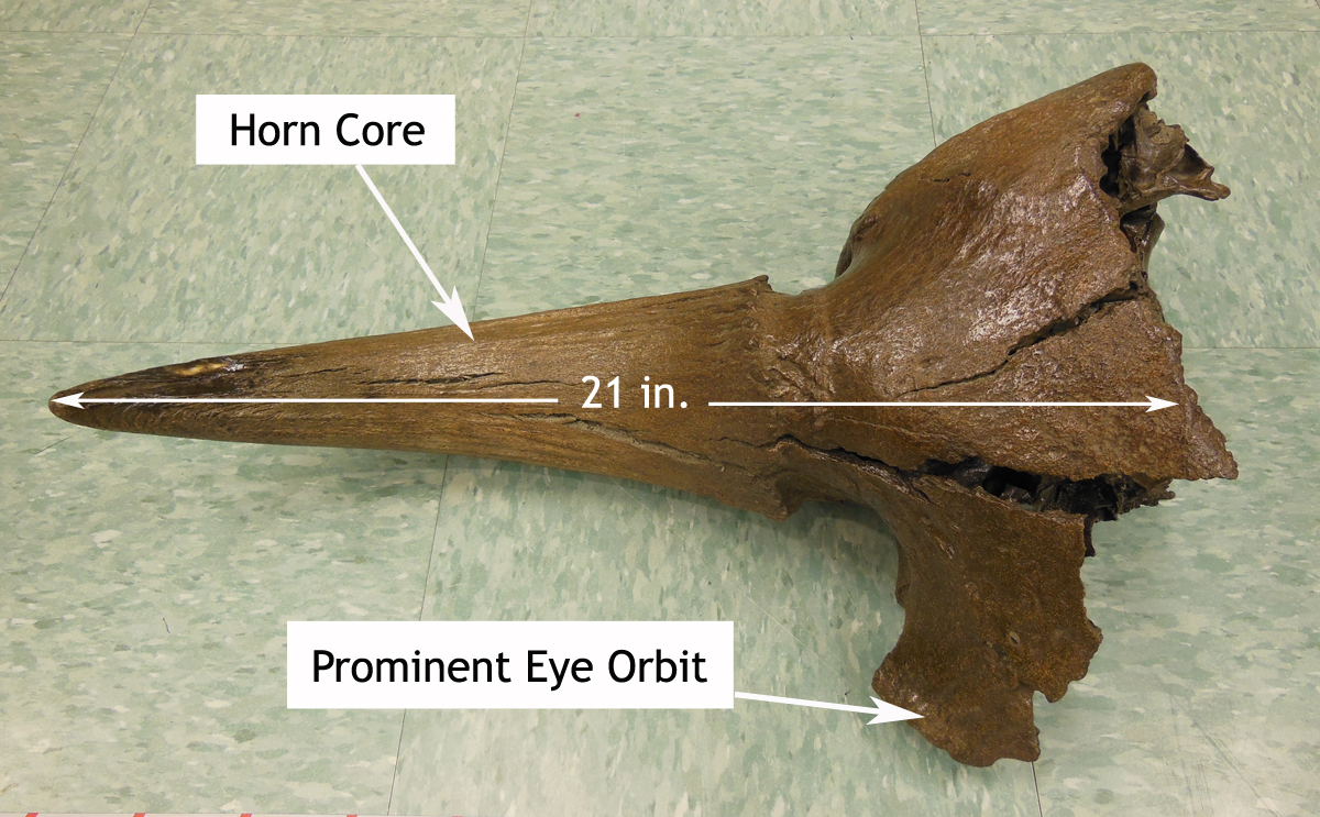 Kotz-area-cranial-fragment-without-scale