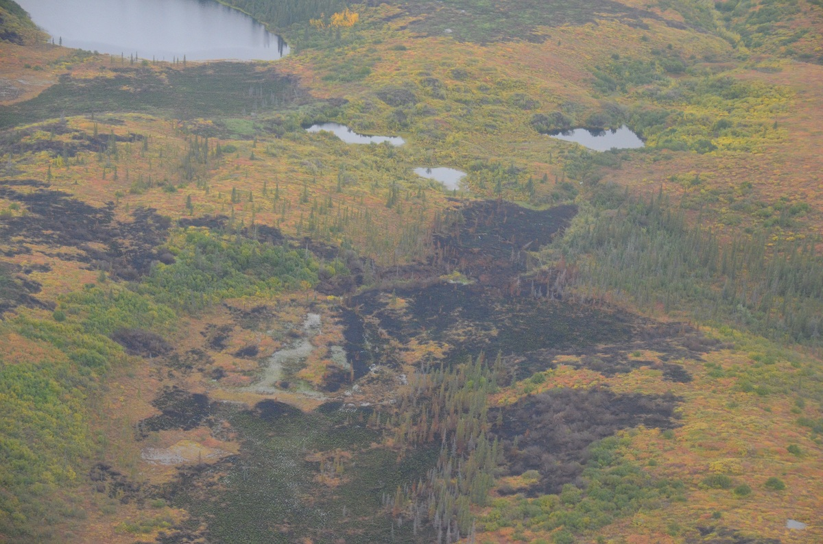 Recent burn in Noatak National Preserve