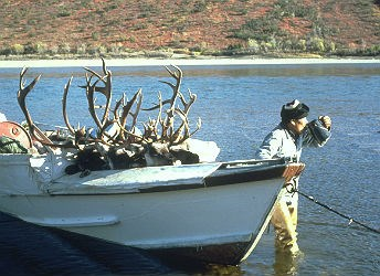 boat with several caribou carcasses