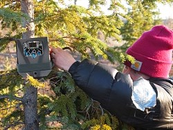 biologist straps a camera to a tree