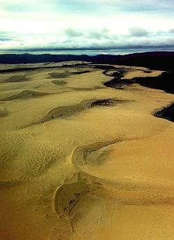 Ariel view of sand dunes surrounded by forest
