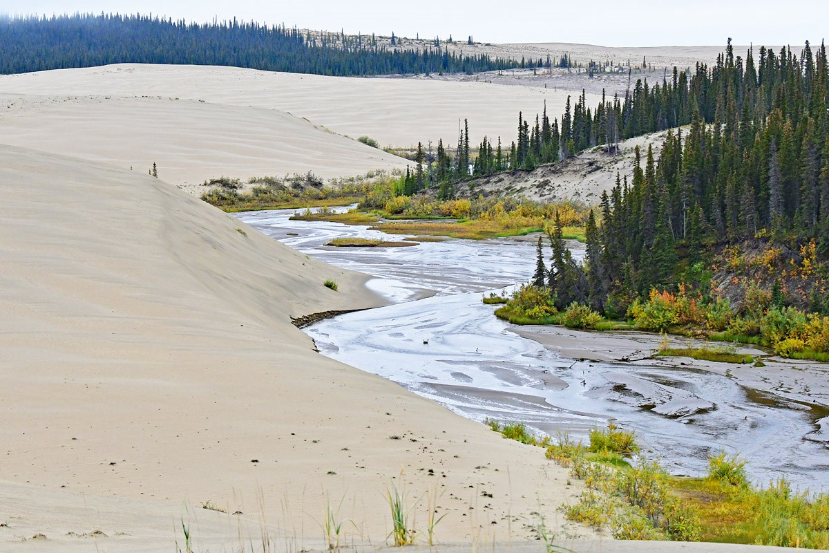 Great Kobuk Sand Dunes intertwined with stream and trees