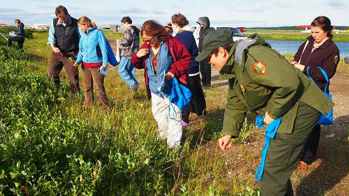 People collecting plants on the tundra