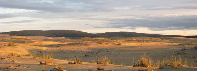 golden evening light on sand dunes in Kobuk Valley, mountains in the background