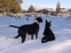 dogs at Lava Beds in winter