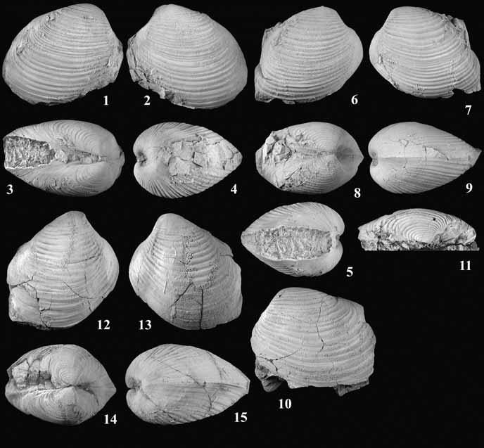 15 shell-shaped fossils on a black background