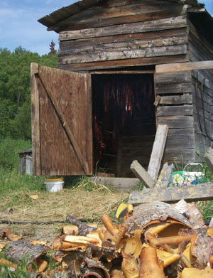 a log building with salmon strips hanging inside, behind a pile of curling birch bark