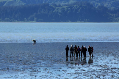 Visitors view a brown bear in the coastal mud flats at Lake Clark National Park and Preserve