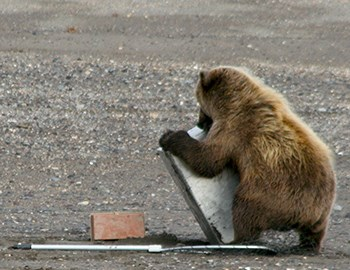 Photo of a small brown bear wrestling with a large metal box designed to store salmon. The bear is not much larger than the box.