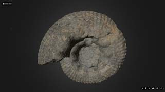 photo of a spiral-shaped fossilized shell