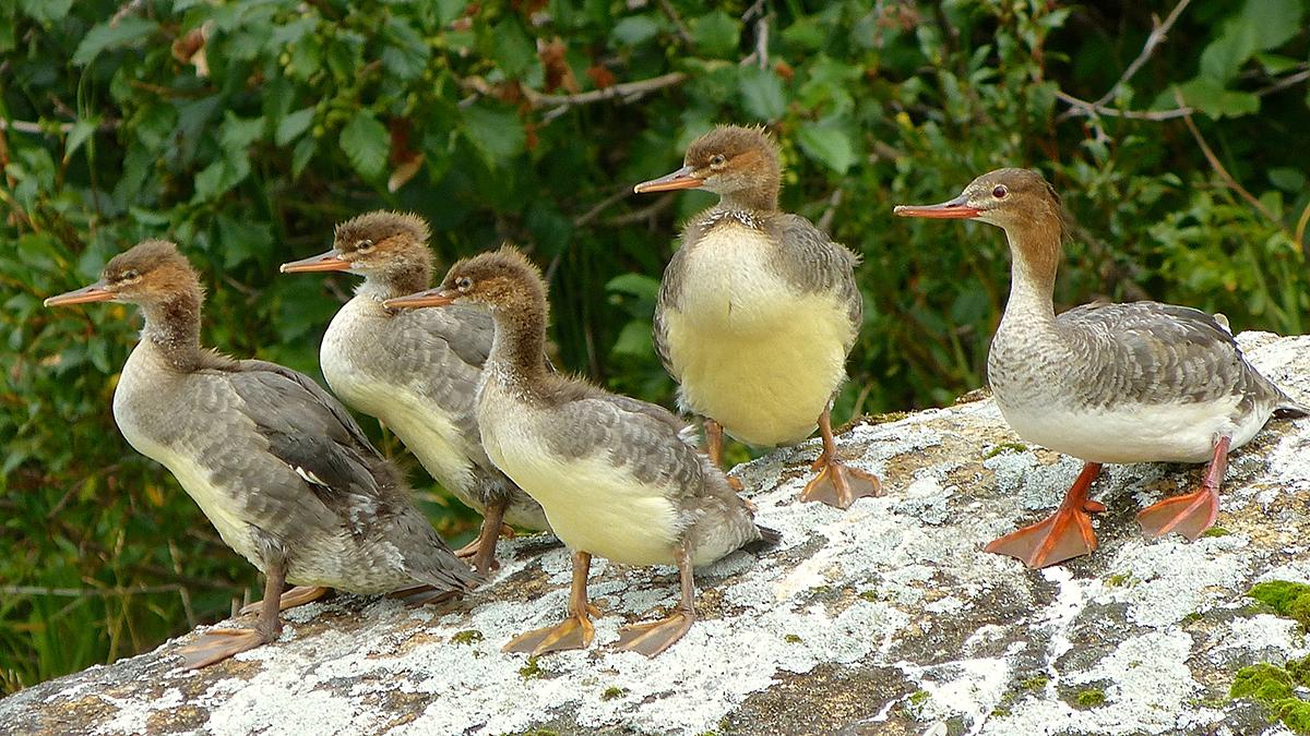 birds lake clark national park u0026 preserve u s national park