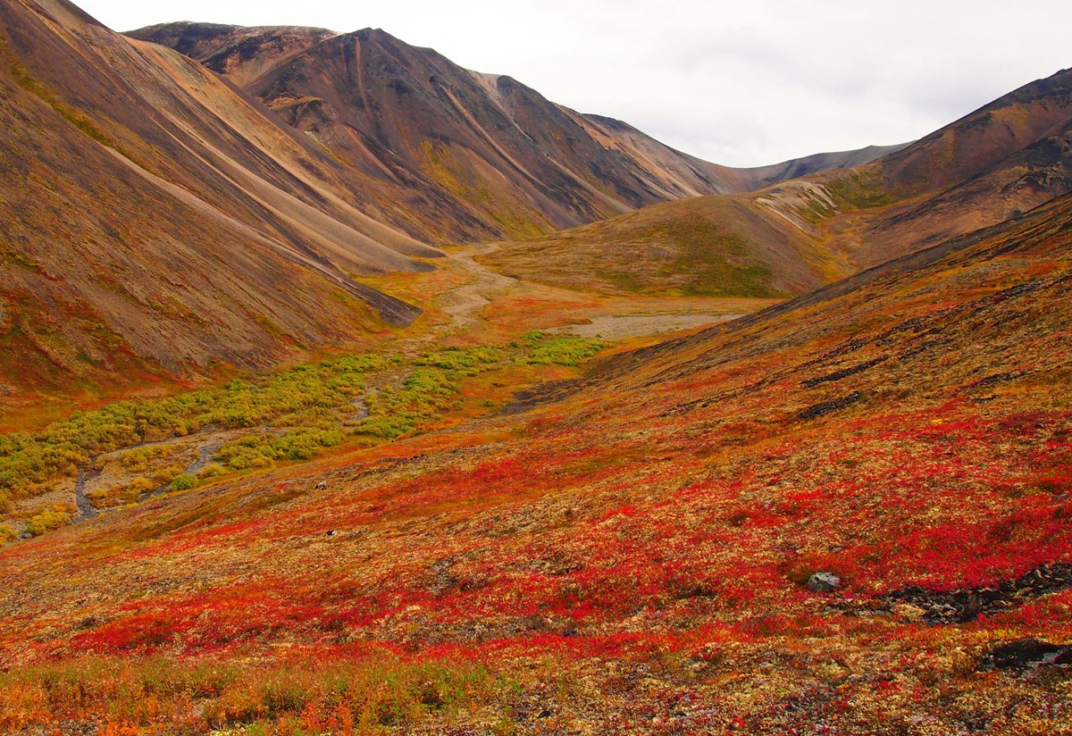 A creek bed between orange and red tundra slopes