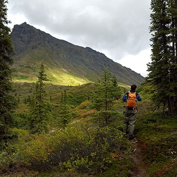 photo of a hiker wearing an orange backpack walking through a spruce forest near tree line with a a sun-dappled mountain looming ahead.
