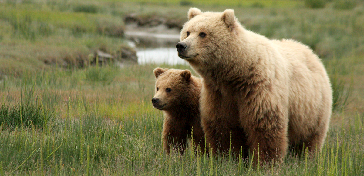 Mother bear with cub - www.nps.gov