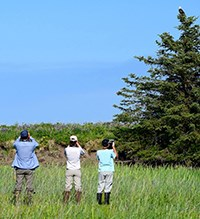Three people with binoculars and cameras stand with their backs to the photographer watching a bald eagle perched in an evergreen tree.