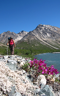 Photo of a woman backpacker walking on a gravel stream bank with mountains in the background and pink flowers in the foreground.