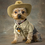Cooper the Lake Mead Bark Ranger