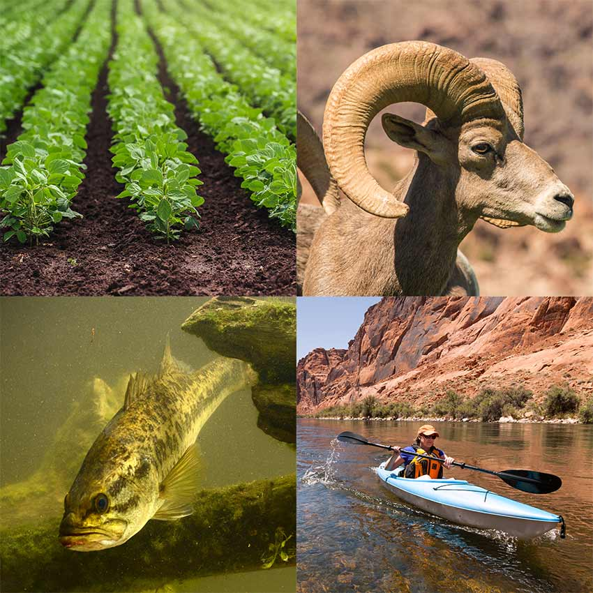 Picture grid of those who rely on water from Lake Mead