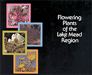 flowering plants graphic