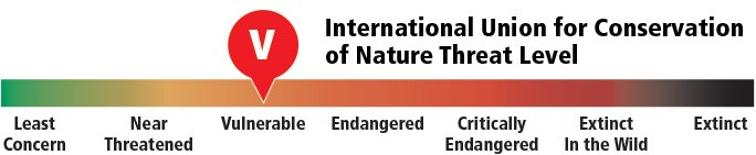 Graph illustrating the IUCN threat level for desert tortoises range.