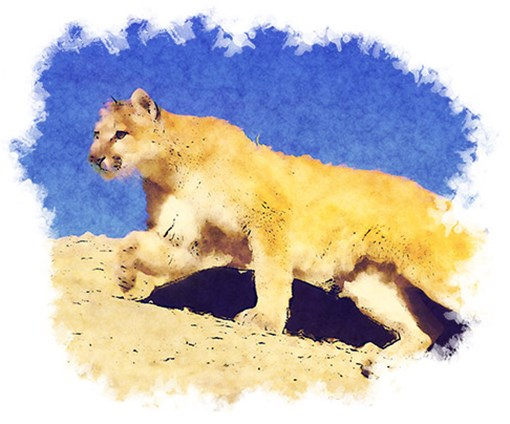 Mountain-Lion-Top-Image