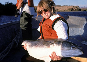 Fish and aquatic biota lake mead national recreation for Lake mead fishing guides