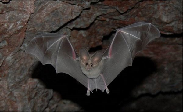 Bat flying out of a cave