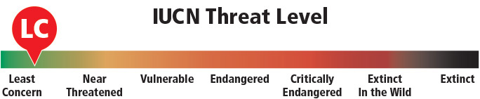 bighorn-ICUN-Threat-Level