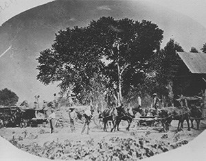 Mormon settlers with horses and farming equipment.