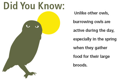 FACTS ABOUT OWLS - ThingLink