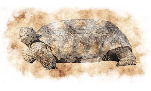 Painting of a tortoise.