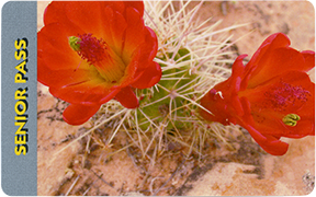 Pass card with photo of red blooms on cactus