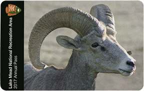 Pass card, with close up photo of desert bighorn ram