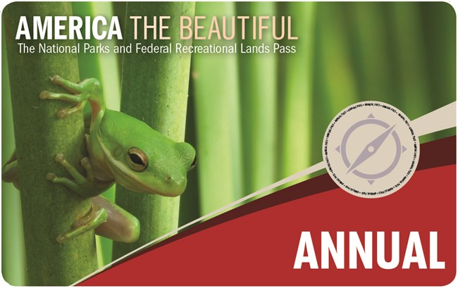 "Small green tree frog peaks out of folliage on cover of ""America the Beautiful"" annual pass"