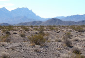 Nellis Wash Wilderness with Spirit Mountain in the background