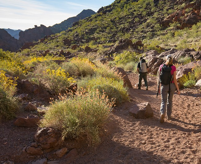 Two hikers walking through desert landscape surrounded by boulders and flowers.