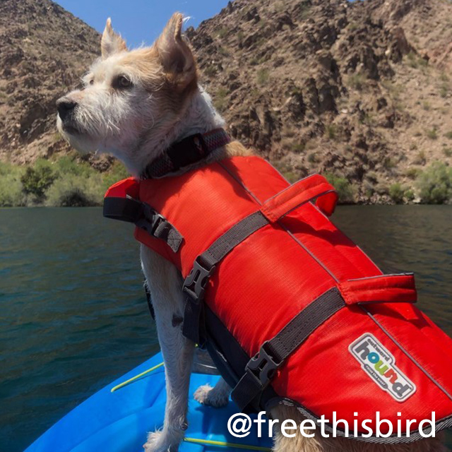 dog in life jacket on a paddlecraft