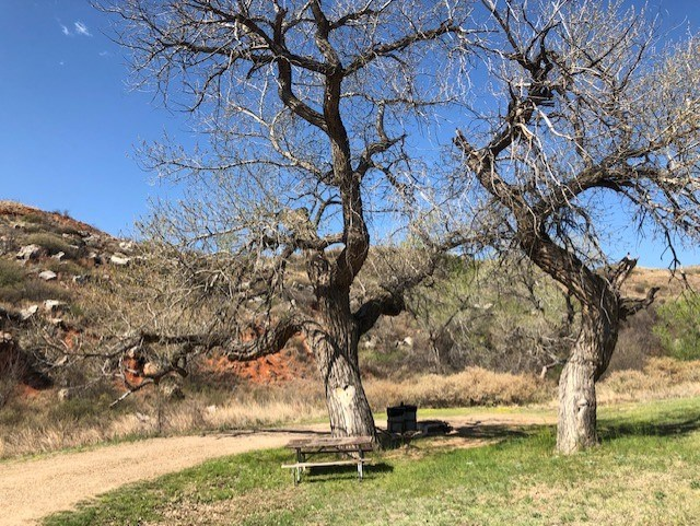 Campsite with picnic tables and large cottonwood trees.  The sky is blue and it is a sunny day. There are large rocky mesas in the background.