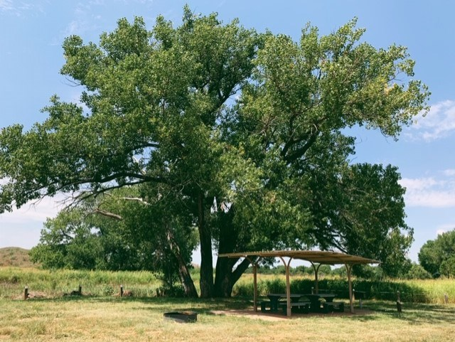 A large cottonwood provides shade for a campsite.  The skies are blue and it is a sunny day.