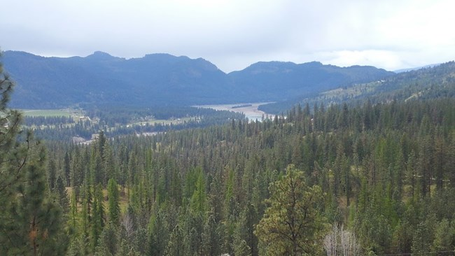 Looking down on Lake Roosevelt in the distance with thick trees in foreground.