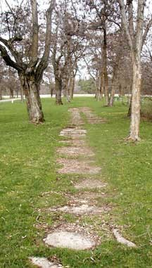 Old side walk embedded in grass and surrounded by leafless locust trees.