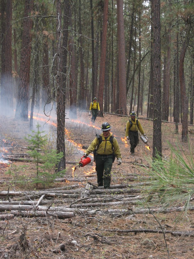 Firefighters walk with drip torches to ignite a prescribed burn.