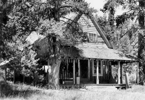 black and white photo of rustic cabin surrounded by large trees