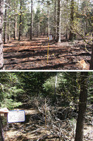 Manzanita Lake Campground before and after restoration