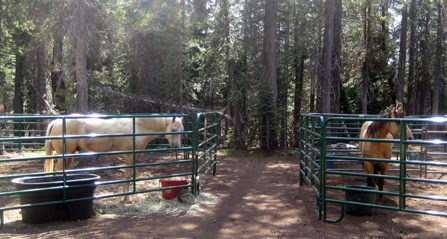 Two horses in horse corrals