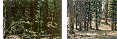 picture showing forest floor before and after prescribed burn
