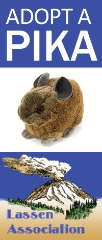 Four stacked images: outline of pika, adopt a pika text, stuffed pika, and Lassen Association logo