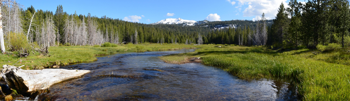 Grassy creek with snow-capped mountain