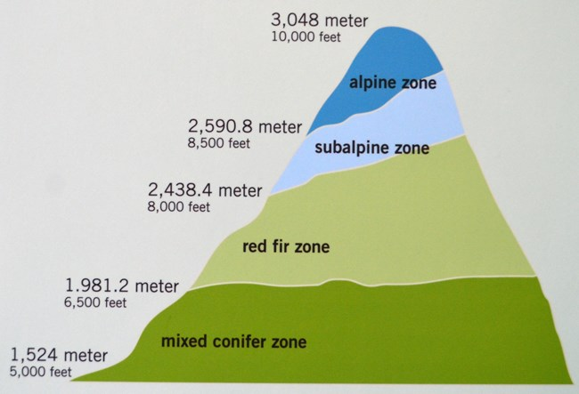 Graphic depicting plant life zones in Lassen