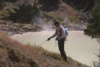 Former Vegetation Ecologist, Martin Hutten, spraying invasive cheatgrass at Boiling Springs Lake.